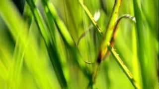 Abstract Camera Movement Through The Grass