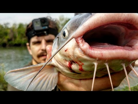 Catching Blue Catfish With Fish Guts!