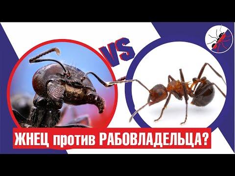Вопрос: Сколько хромосом у муравья?