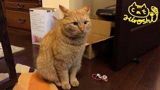 また外で兄猫チロが野良猫と戦っているようです。 みんな落ち着かない様...