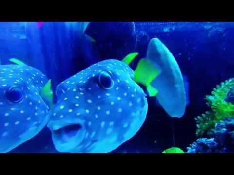Hendersonville NC Aquarium by ECCO