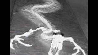 Weird Really Scarey Pictures - WTF - www.magicthoughts.com Thumbnail