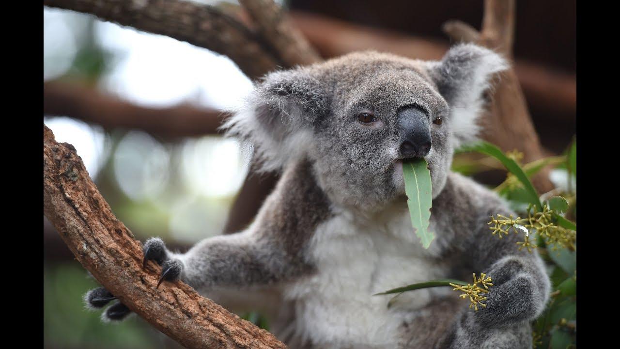 Sevimli Hayvanlar ile İlgili Hiç Duymadığınız  İlginç Keşifler 2 (komik videolar )