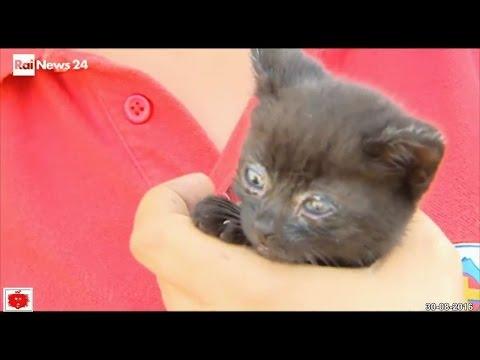Terremoto Cucciolata di Gattini neri salvati tra le macerie a Pescara del Tronto