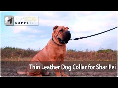 Elegant Smooth Leather Dog Collar for Cute Shar Peis