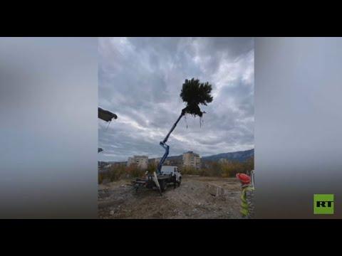 إنقاذ شجرة صنوبر نمت في مكان شاهق على سطح بناية  - نشر قبل 23 دقيقة