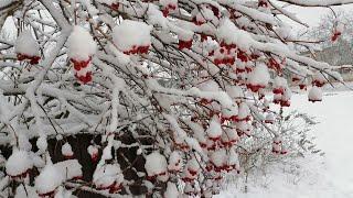 Первый снег, природа Алтая, для вас друзья кто не видел никогда снег.