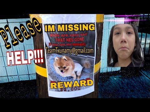 WE STILL HAVEN'T FOUND OUR PUPPY!! Please HELP us find March...Day #15!!! | Familia Diamond