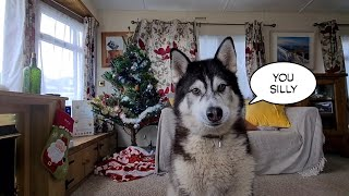 Malamute kicks off when I Pronounce a Name Wrong!