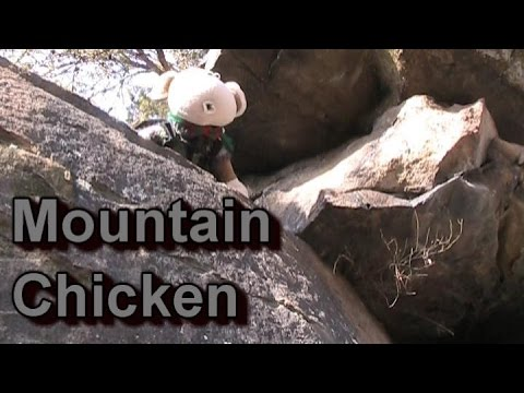 MMA Plush- Mountain Chicken (Muffet ep. 37)