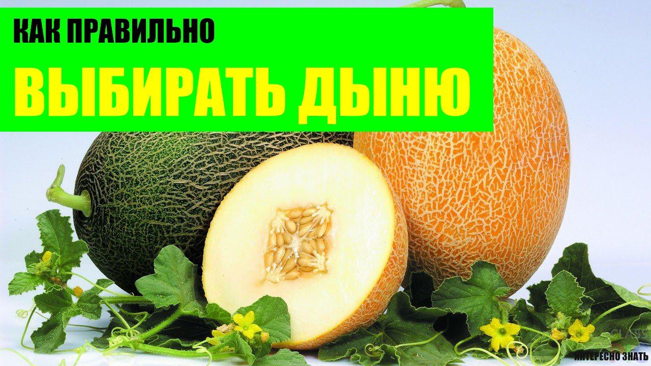 Как проверить нитраты в арбузе: эффективные способы 84