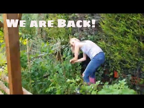 Layla the Boxer Dog Returns!