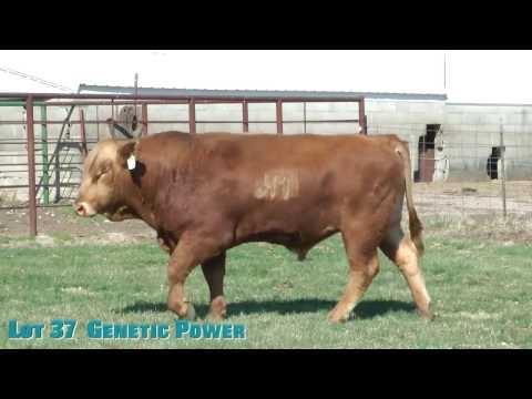 Lot 37  Genetic Power