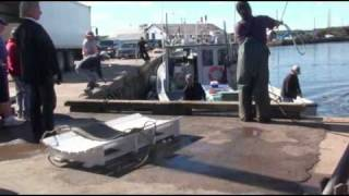 Landing a 1000 lbs  Bluefin Tuna, East Coast of Prince Edward Island,, Canada