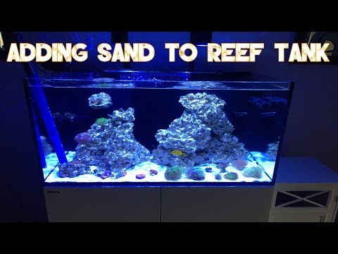 Red Sea Reefer 250 | How To Add Sand To Established Reef Tank | Tropic Eden Meso & Reef Flake Sand
