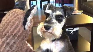 Repeat youtube video Squirrel Bullies Dog To Breaking Point