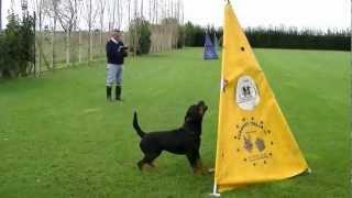 Huck Dei Re Magi - Ipo3 Sez.c - Prova Rottweiler Club Italiano Roma 18 Novembre 2012