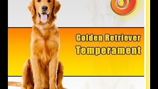 What You Ought To Know About Your Golden Retriever Temperament | Golden Retriever Facts