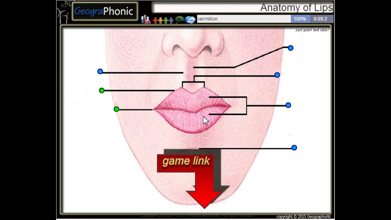 anatomy of lips, philtral column, cupid\'s bow, vermilion, philtrum ...