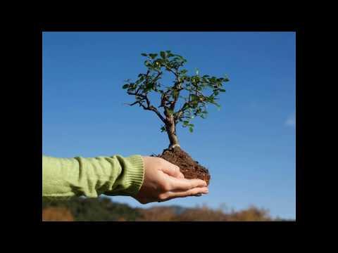 Вопрос: Растения питаются органическими веществами Почему?