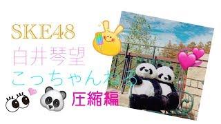 SKE48teamk2の14歳パンダ大好きなこっちゃんこと白井琴望です✨✨ 今回は...