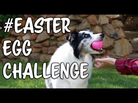 #Eastereggchallenge - Dog training trick challenge
