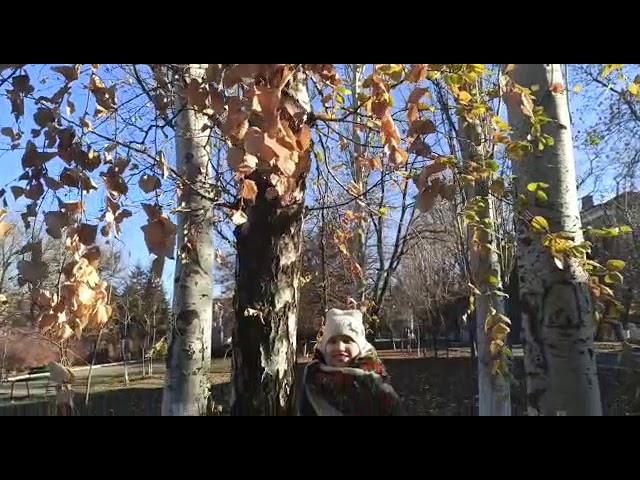 Изображение предпросмотра прочтения – ТаисияСаламатова читает произведение «Берёзка (Зелёная причёска, девическая грудь…)» С.А.Есенина