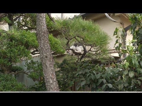 【4K】Walking in Saitama Kumagaya