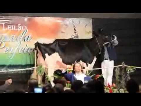 Fazenda São Luís Gonzaga - Novo endereço da Morro Agudo Orquestra Goldwyn Tulipa -TE - MB 89