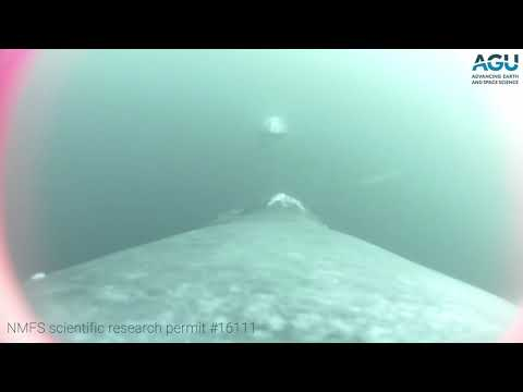 Whale Cam: Watch A Humpback Whale Accelerate Through A School Of Anchovies