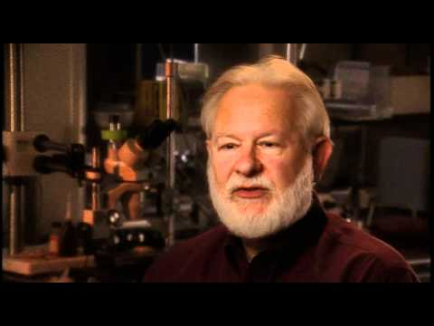 David Nichols: How can we use a non-human model to model the psychedelic state? (part 2)