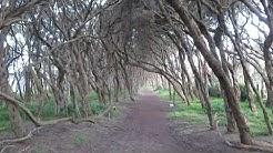 Australien Reise Doku Pflanzenwelt: wenn Bäume einen Tunnel bilden