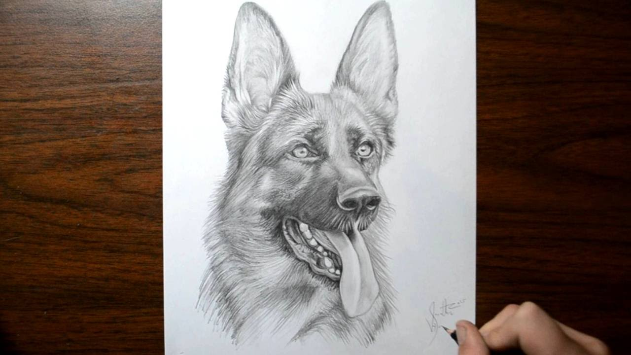 How to Draw a Dog - German Shepherd - YouTube