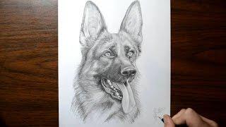 How to Draw a Dog - German Shepherd