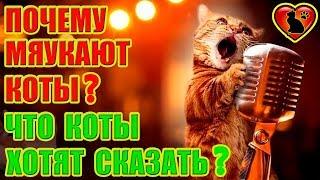 Почему Кот Мяукает Без Причины? Что Кот Хочет Сказать?