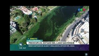 CARLOS PAZ: PREOCUPACIÓN Y POLÉMICA POR LAS ALGAS EN EL LAGO SAN ROQUE