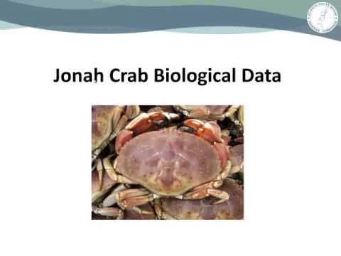 ASMFC American Lobster Board Audio Feb2016