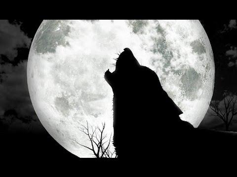 Trailer do filme O Chamado Selvagem