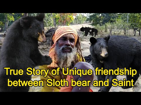 भालू और साधु