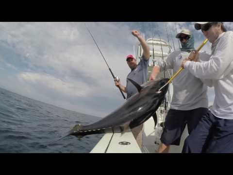 Blue Fin Tuna Popper Fishing Off San Diego
