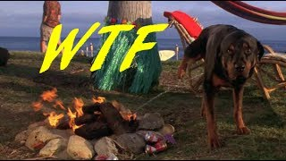 Christmas Vacation 2: Cousin Eddie's Island Adventure - WTF Reviews