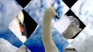 Сергей Жуков & Женя Рассказова - Где же твои крылья?