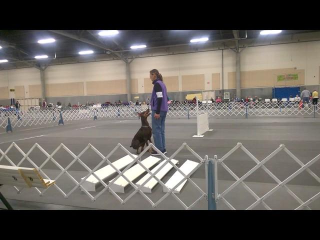 BeaBeas Dog Training - DashDash Broadjump Dec 2016