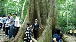cy ch ngn năm cuc phuong national park mt2011 korean department hanoi university