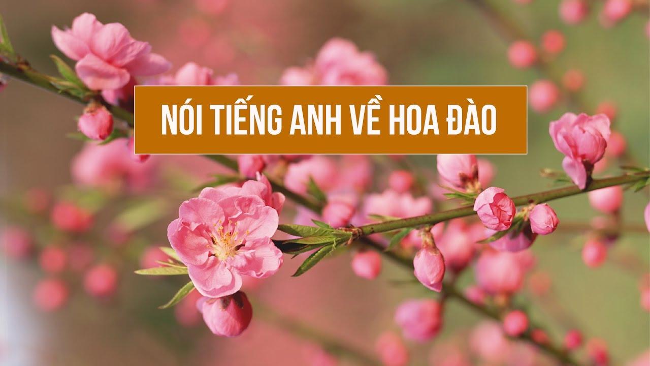 Nói tiếng Anh với người nước ngoài về hoa đào