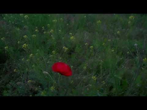 Картошка цветет, а вокруг красота - полевые цветы и травы...