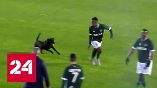 Бездомная собака нагнала страху на бразильского футболиста