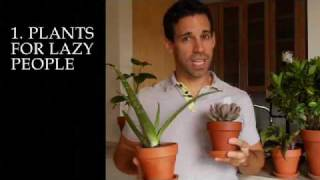 Tips for Growing Plants in an NYC Apartment: Advice from the Experts at Verdant Gardens Design