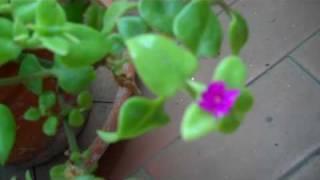 il mio giardino col primo fiore di primavera!!