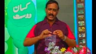 Pest control 500 wheat bags store in Hyderabad Sindh Pakistan Dr. Ashraf Sahibzada